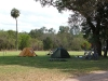 Nice shady, grassy campground at Musgrave.