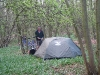 Camping in a forest first day out of London