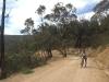 Wee Jasper Road climb revisited