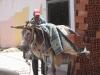 Hardworking donkey