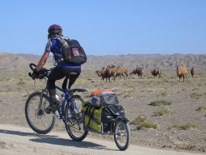 2 Humped camels