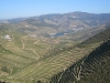It\'s all about the vines. Douro river vineyards, near Porto. Portugal