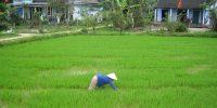 LWH_Vietnam_0155